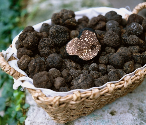What Makes Truffles So Special?