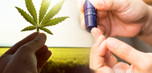 How CBD Oil Is Beneficial In Diabetes?