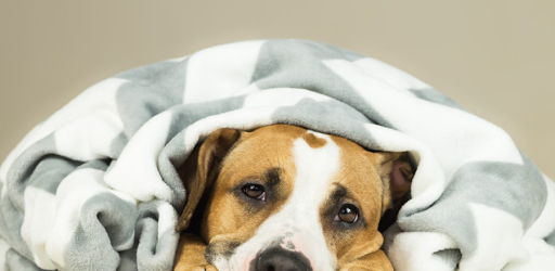 Natural Ways to Reduce Nervousness in Dogs